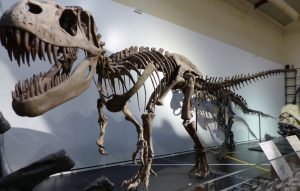 Dinosaur fossil at Museum of Natural History in Madrid, Spain