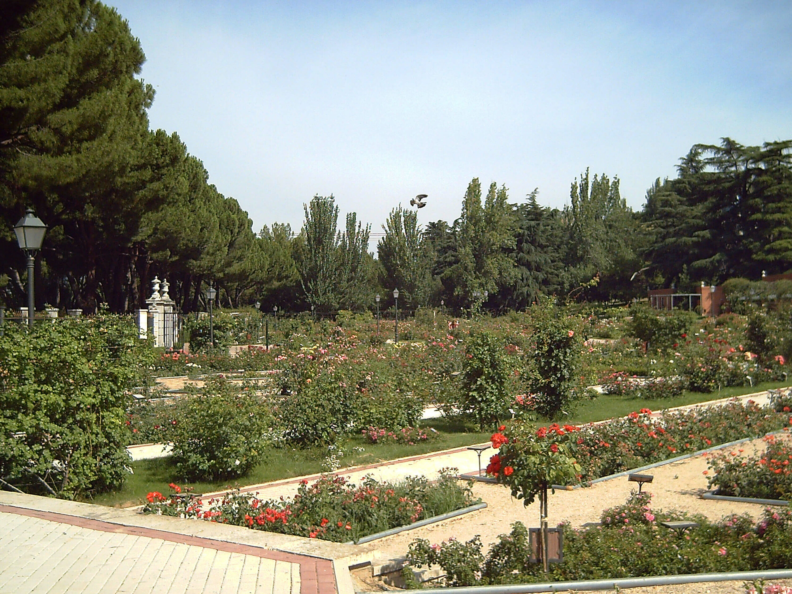Rose Garden Park Oeste Madrid