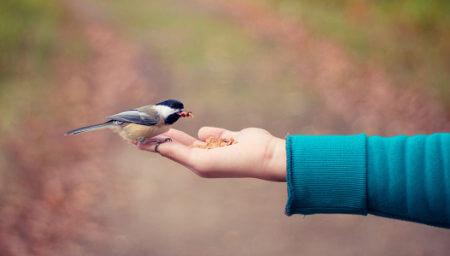 Pajarito en la mano de alguien